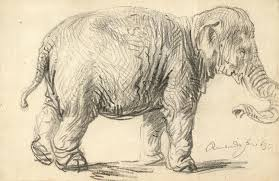 an elephant drawing by rembrandt