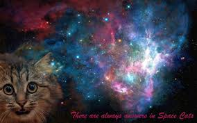 cat universe wallpaper space cat space cat galaxy hd wallpapers desktop and mobile