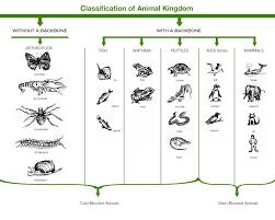classification essay sample classification of animal kingdom learn three domains of life