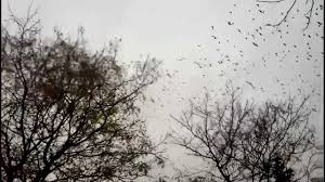 birds fly away from tree