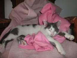 stray rescue program toronto cat rescue