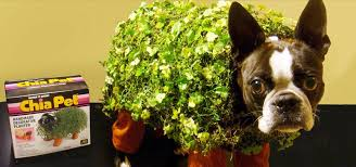 Dog Halloween Costumes Adults Chia Pet Pet Costume 9 Adorable Diy Halloween Costumes