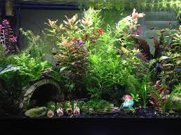 freshwater aquarium setup with live plants aquarium design ideas