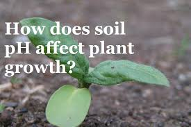 how well would a plant grow under pure yellow light how does ph affect the growth of plants youtube