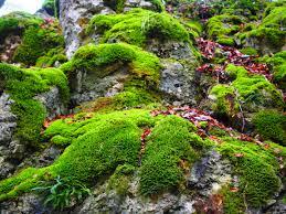 floor plant free images tree rock leaf flower stone overgrown stream