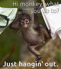 Monkey Meme - monkey hanging out animals pinterest monkey animal and cat