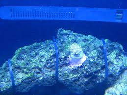 Aquascape Construction Epoxy How To Attach Corals In Your Reef Aquariumsandbaraquatics