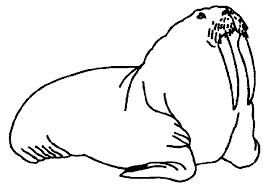 117 dessins de coloriage Morse à imprimer