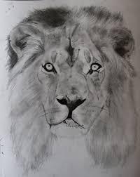 lion sketch by ifinch on deviantart