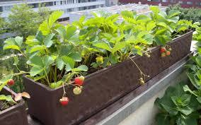 gem se pflanzen balkon eigenes gemüse auch ohne garten utopia de