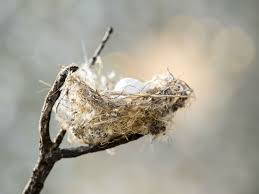 types of bird nests