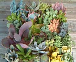indoor succulent garden ideas margarite gardens 17 best 1000 ideas