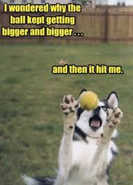 Hilarious Dog Memes - 25 hilarious dog memes that will brighten up your day gallery