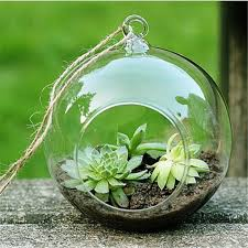 Round Glass Vase Pot Round Glass Promotion Shop For Promotional Pot Round Glass On