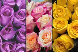 color roses send the right message with the right color color911