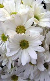 44 best daisy wedding images on pinterest marriage daisies