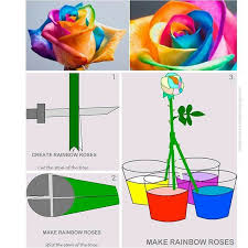 best 25 rainbow roses ideas on pinterest rainbow flowers
