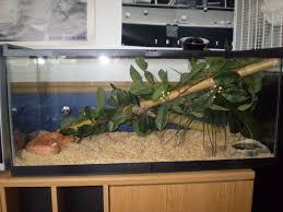 100 gallon reptile aquarium aquarium design ideas