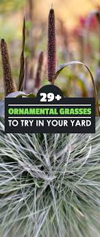 29 ornamental grasses and how to grow them