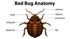 One Bed Bug Pest One Pest Control Bed Bug Removal Mansfield Tx