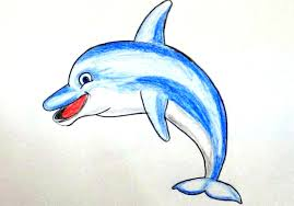 dolphin drawing colored free download clip art free clip art