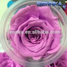 purple roses for sale appealing forerver stem preserved flowers purple roses for