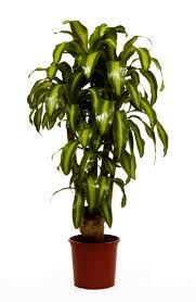 office plants royalty free stock image image 20141836 office