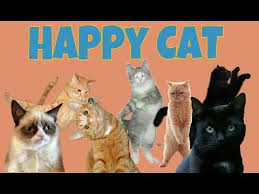 Happy Cat Meme - happy cat meme youtube