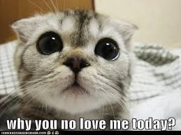 Why You No Love Me Meme - why you no love me today lolcats lol cat memes funny cats