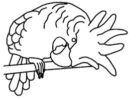 parrot coloring pages coloringpages gekimoe u2022 100922
