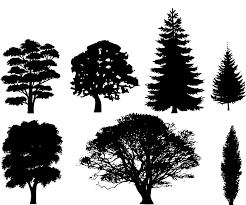 free vector graphic black trees deciduous needles free image
