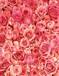 Flower Love Pics - best 10 rose flower pictures ideas on pinterest flower pictures