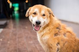 5 skin diseases in dogs and how to treat them