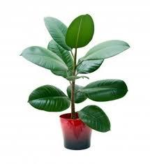 sturdy houseplants u2013 popular easy care potted plants interior
