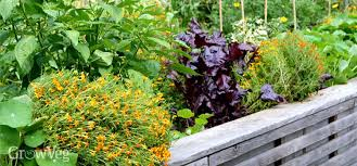 maximize your space stunning design ideas for small gardens