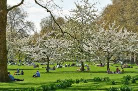 trees st james u0027s park the royal parks