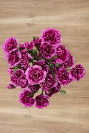 purple carnations purple carnation flower plants for floral arrangements flower