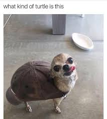 Funny Turtle Memes - memebase turtle all your memes in our base funny memes