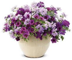 Plant Combination Ideas For Container Gardens - 81 best gardening flower recipes images on pinterest proven