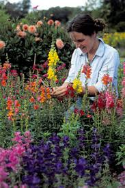 cut flowers growing and selection rhs gardening