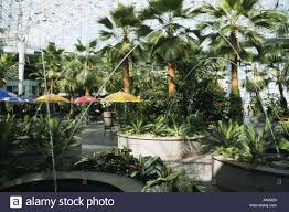 navy pier chicago illinois crystal garden indoor garden palm trees