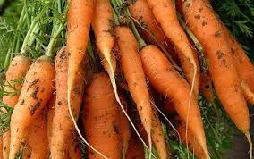 storing root vegetables over winter telegraph