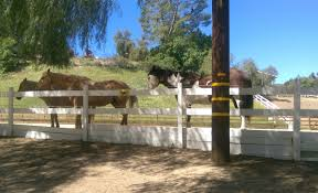 celebrity life hidden hills ca siteswithstacey hidden hills is a quiet bedroom community that maintains a country atmosphere with trails horses and an abundance of greenery there are no sidewalks and