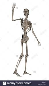 front view of human skeleton waving goodbye isolated on white