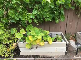 organic gardening tips an insiders guide to lush organic gardens