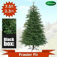 10 best frasier fir images on artificial tree firs