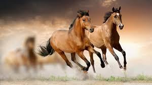 ferrari horse vs mustang horse horse page 1