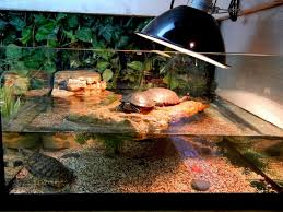what a cool turtle tank yelp