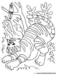 tiger color sheet gianfreda net