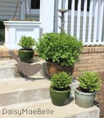 potted boxwoods for the front porch daisymaebelle daisymaebelle